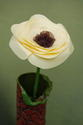 Cream Poppy with Brown