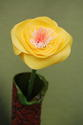 Yellow Poppy with Pink/White